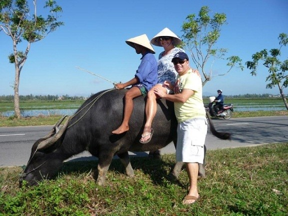 Riding buffaloes is also attractive to tourists, especially those from the Western world.