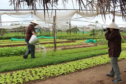 Foreigners water vegetables in Tra Que vegetable village.