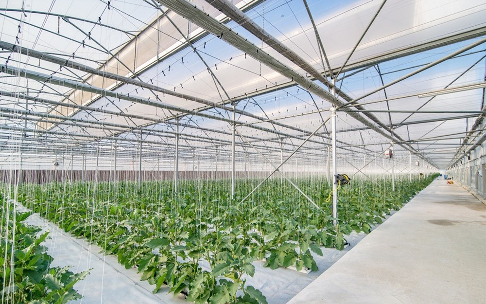 Smart and modern technology in VinEco Nam Hoi An helps manage and control the temperature and the humidity in the areas of greenhouse and membrance house….