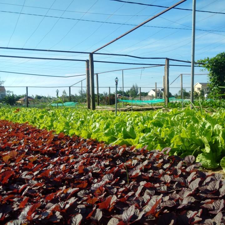 A corner of Tra Que vegetable village. Photo: TN&MT