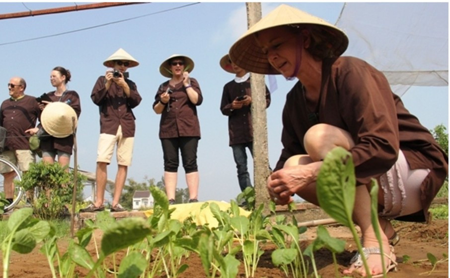Foreign tourists are learning about vegetable growing. Photo: TN&MT
