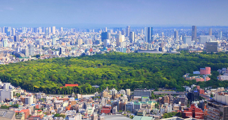 Yoyogi - một trong những công viên rộng lớn giữa lòng Tokyo. Ảnh: TheTimes