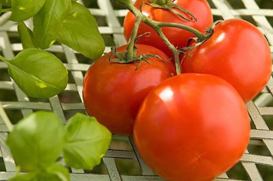 Cà chua có hương vị thơm ngon và nhiều lợi ích cho sức khỏe