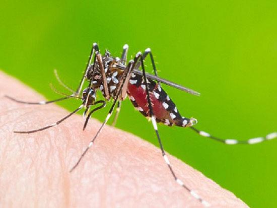 Những người có nhóm máu O có thể bị muỗi đốt nhiều hơn người khác - Ảnh: Shutterstock