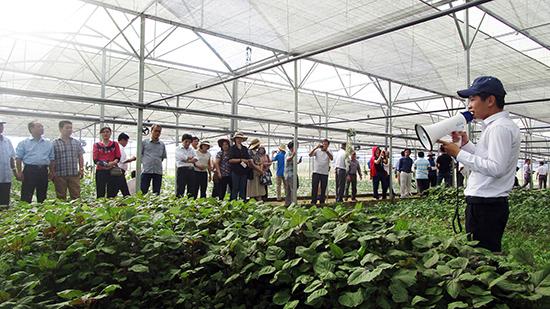 Việc ứng dụng công nghệ cao vào nông nghiệp được kỳ vọng sẽ mang lại hiệu quả kinh tế cao.Ảnh: V.L