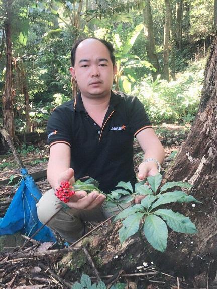 A Ngoc Linh ginseng plant fruits.