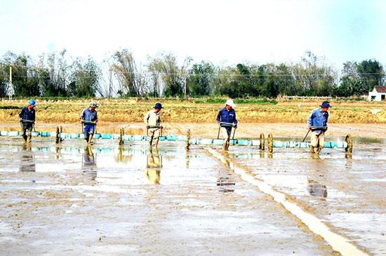 Người dân áp dụng công cụ sạ hàng trên cánh đồng tập trung ở xã Bình Đào.  Ảnh: VIỆT NGUYỄN