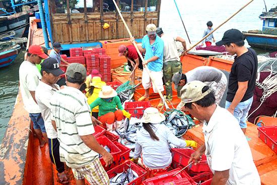Nghề khai thác hải sản của huyện Thăng Bình thu được sản lượng cao.