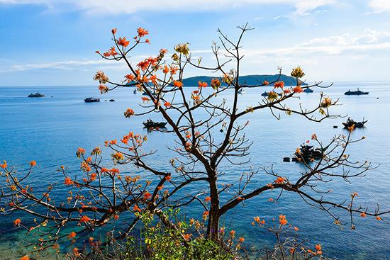 Sắc hoa ngô đồng trong màu xanh của biển trời.