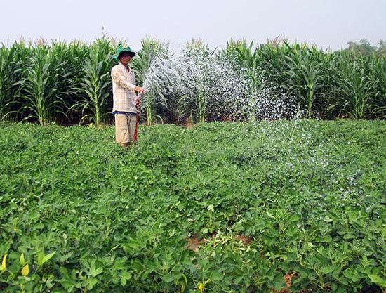 Hệ thống thủy lợi hóa đất màu được xây dựng bài bản, nông dân có điều kiện hình thành những vùng sản xuất cây trồng cạn theo phương thức hàng hóa tập trung cho giá trị kinh tế cao. Ảnh: VĂN SỰ