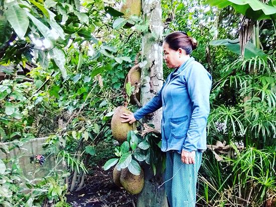 Vườn mít nhà bà Trần Thị Xuân ra quả trĩu cây.