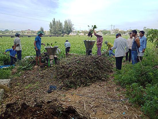 Bà con nông dân băm bèo lục bình trên sông Bàn Thạch để ủ làm phân vi sinh. Ảnh: T.Q