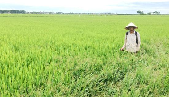 Nông dân xã Duy Phước cho rằng mức thu thủy lợi phí là 45 nghìn đồng/1 sào/1 vụ là cao. Ảnh: PHAN VINH
