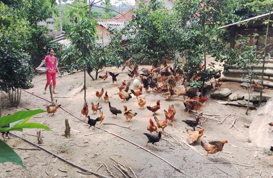Người dân làm kinh tế hiệu quả dựa trên vườn nhà. Ảnh: PHAN VINH