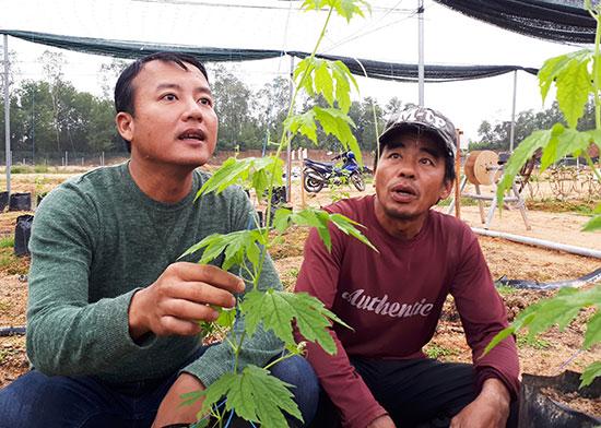 Chủ nhiệm Hợp tác xã Thực phẩm sạch Phú Ninh - Huỳnh Đức Tường với quyết tâm làm nông nghiệp sạch. Ảnh: LÊ QUÂN