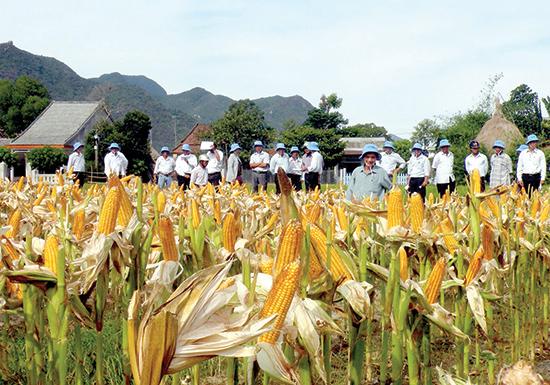Chuyển đổi từ nông nghiệp hóa chất sang nông nghiệp hữu cơ là xu hướng tất yếu.Ảnh: VĂN LÊ