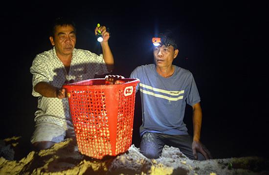 Kiểm lâm viên Lê Đức Du (bên phải) và anh Nguyễn Duy Thành cẩn thận lấy trứng rùa vừa đẻ cho vào giỏ để đem lên hồ ấp. Ảnh: XUÂN THỌ