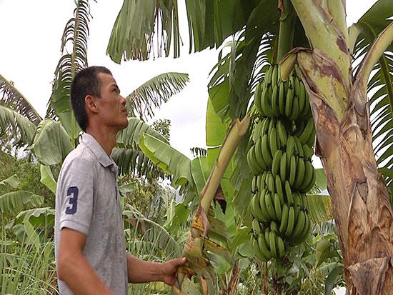 Mô hình vườn cây ăn quả trên địa bàn Trà Tân mang lại nguồn thu nhập khá cho người dân nơi đây. Ảnh: T.B