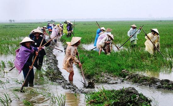 Những năm qua, nông dân toàn tỉnh đã DĐĐT được 18.487ha đất nông nghiệp.Ảnh: VĂN SỰ