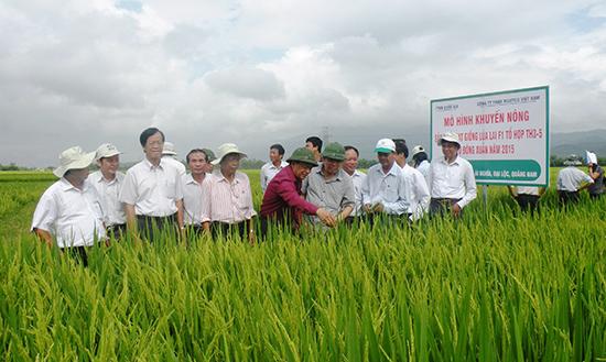 Liên kết sản xuất giống lúa hàng hóa là thế mạnh của Quảng Nam trong thời gian qua. Ảnh: VĂN SỰ