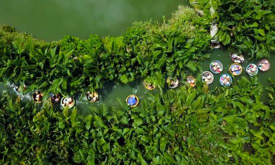 Quang cảnh rừng dừa Cảm Thanh