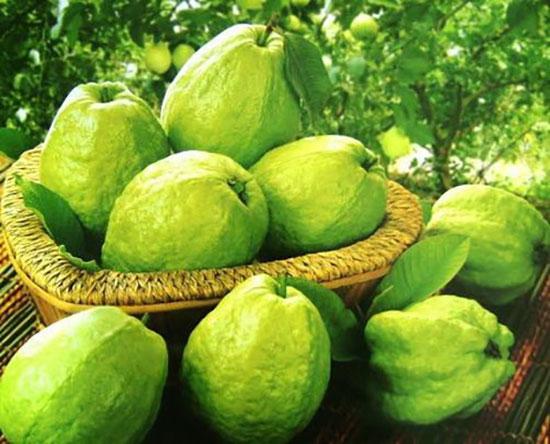 Ổi giàu chất xơ, nhiều vitamin ít làm tăng đường huyết, ít ngọt, rất phù hợp cho bệnh nhân đái tháo đường.