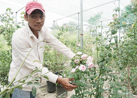 Từ Hiếu khởi nghiệp từ hàng trăm loài hoa hồng ngoại. Ảnh: N.TRANG