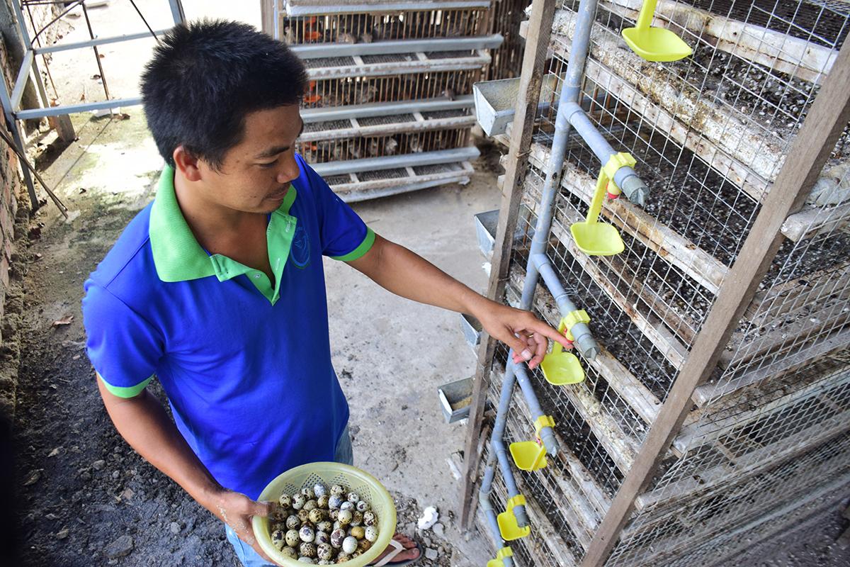 Anh Dũng kiểm trai lại hệ thống nước uống của chim cuốc trong trại chăn nuôi của mình. Ảnh: THANH THẮNG