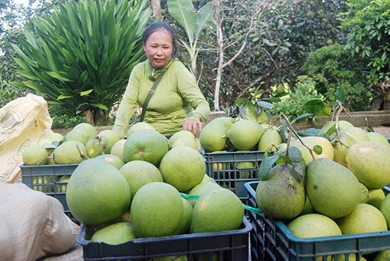 Chị Lương Thị Vân ở TP Tam Kỳ - một bạn hàng mua thanh trà Tiên Hiệp lâu năm tỏ niềm vui bên lô thanh trà đạt chất lương sắp được chị chuyển đến Quảng Ngãi bán.