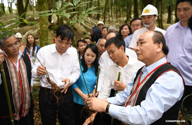 """PM Nguyen Xuan Phuc (R) said, """"Ngoc Linh ginseng is a Vietnam's national treasure""""."""