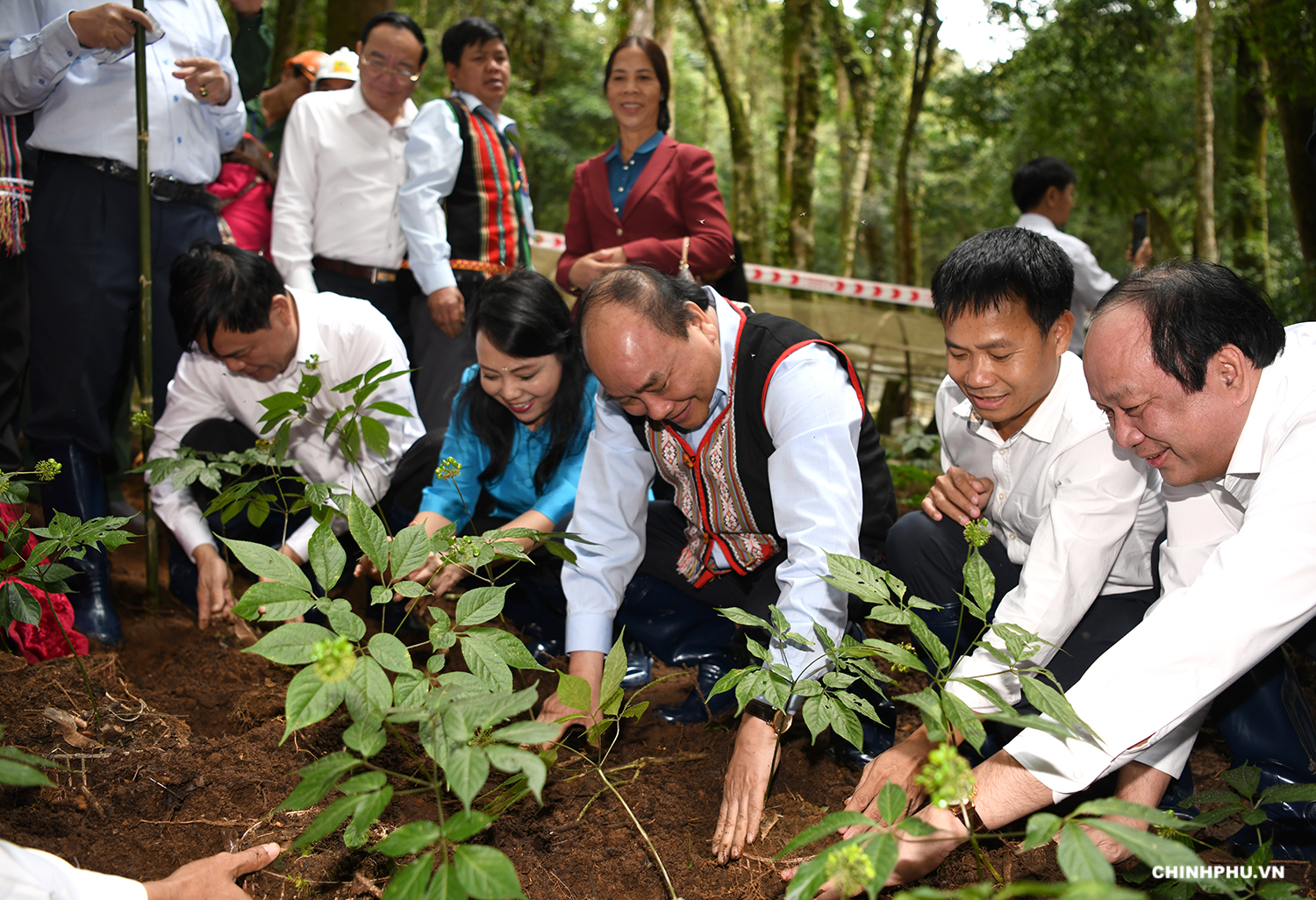 PM Phuc plants ginseng trees at the center. Photo: chinhphu.vn