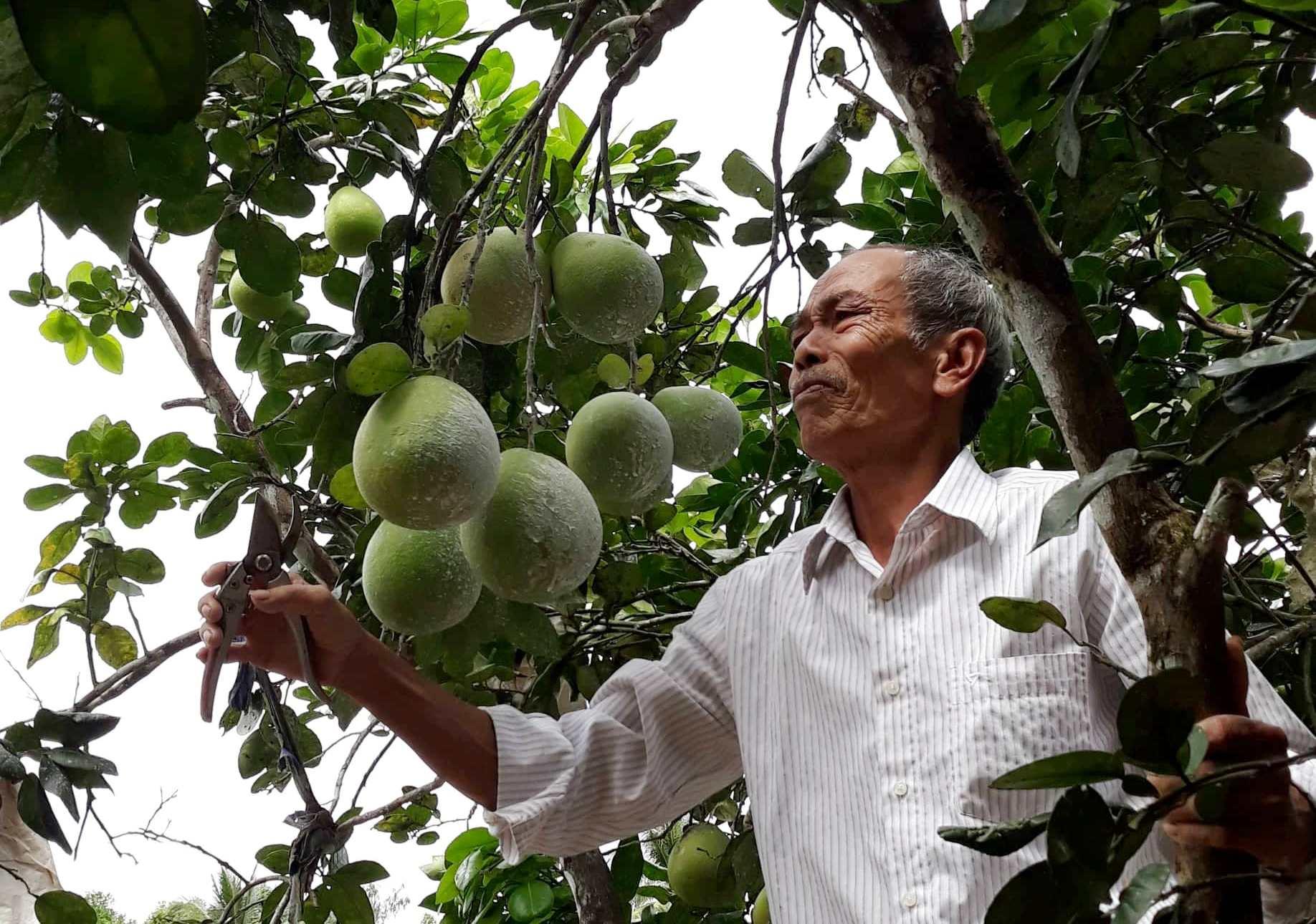 Thanh trà, loại trái cây đặc sản ở Lộc Yên, luôn đầy sức cám dỗ bởi vị ngọt the rất riêng. Ảnh: B.A