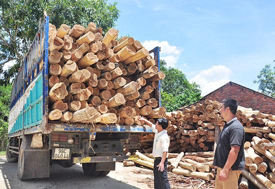 Hợp tác xã Nông nghiệp Hiệp Thuận thu mua gỗ keo để chế biến. Ảnh: VINH ANH