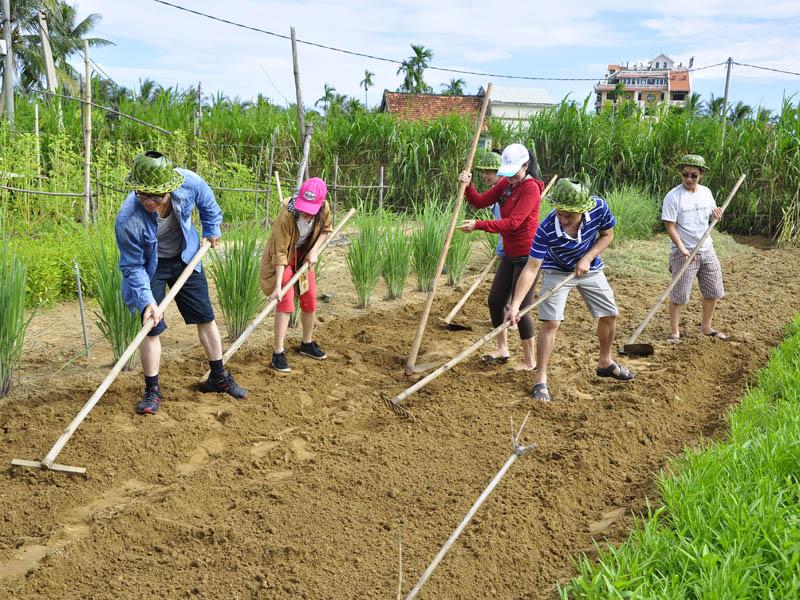 Người dân trồng rau hữu cơ tại thôn Thanh Đông, xã Cẩm Thanh, TP.Hội An. Ảnh: LÊ HIỀN