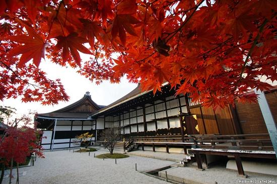 Rực rỡ sắc màu Thu Nhật Bản