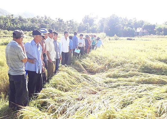 Dự án không chỉ đưa năng suất lúa tăng bình quân gần 10 tạ/ha so với cùng kỳ mà còn tạo ra sản phẩm an toàn, môi trường sống thân thiện.