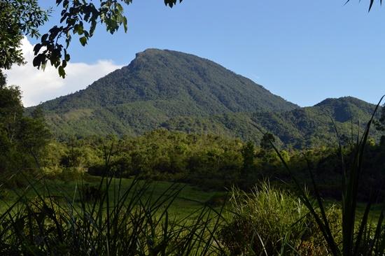 Cảnh quan thiên nhiên khu vực Mỹ Sơn được phục hồi, bảo vệ nghiêm ngặt