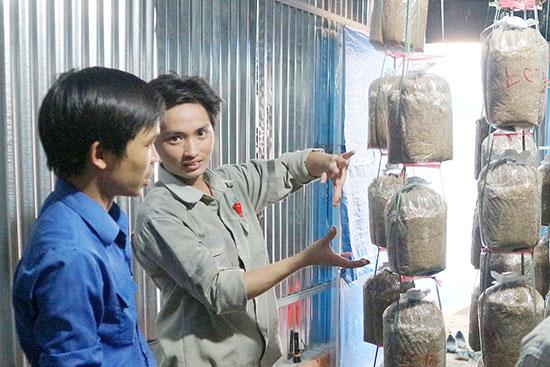 Trang trại nấm của anh Hồ Thanh Vỹ được nhiều nhà đầu tư quan tâm sau khi tham gia diễn đàn hỗ trợ khởi nghiệp.Ảnh: P.VINH