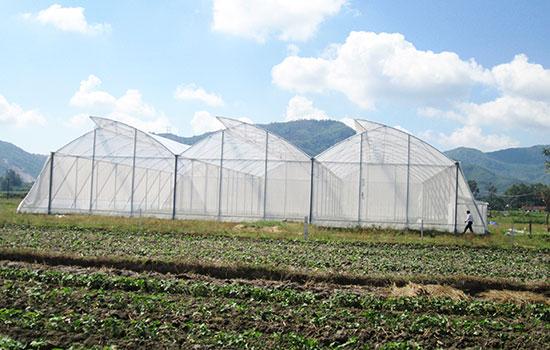 Mô hình sản xuất rau sạch trong nhà lưới vừa được HTX đầu tư xây dựng bài bản. Ảnh: VĂN SỰ