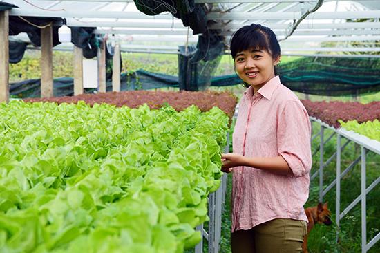 Mô hình trồng rau thủy canh tại phường Điện Ngọc, TX.Điện Bàn. Ảnh: Q.TUẤN