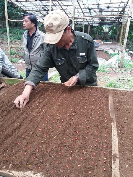 Chính sách phát triển cây sâm Ngọc Linh đã tạo ra chuyển biến tích cực, hiện có nhiều tập đoàn, doanh nghiệp đăng ký đầu tư vào vùng sâm.  TRONG ẢNH: Gieo hạt sâm để tạo nguồn giống. Ảnh: M.Đ