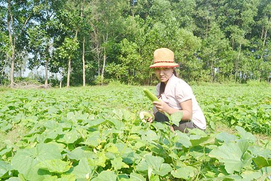 Nghị định 116 sẽ giúp khơi thông tín dụng tam nông, nâng cao sản xuất của người nông dân hoặc doanh nghiệp. Ảnh: Q.Việt