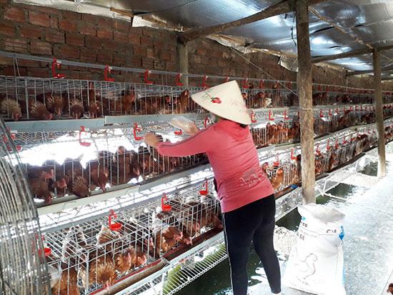Mô hình nuôi gà lấy trứng thương phẩm của bà Phan Thị Thanh Vân, thôn Cẩm Văn Bắc, xã Điện Hồng. Ảnh: P.PHƯƠNG