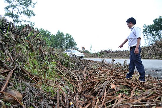 Người dân khai thác keo vứt vỏ, cành và lá cây lấp mương thoát nước dọc trên ĐT617. Ảnh: C.TÚ