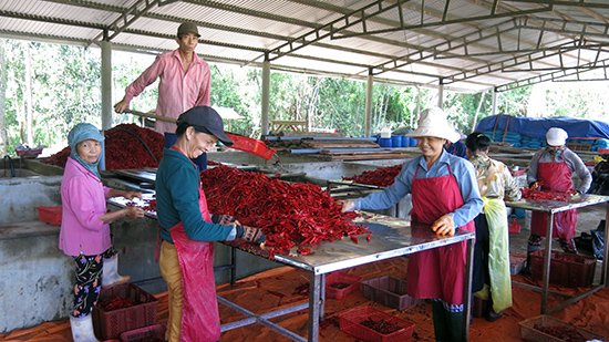 Không dễ thu hút doanh nghiệp đầu tư vào nông nghiệp, nông thôn.Ảnh: T.DŨNG