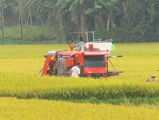 Không dễ thu hút doanh nghiệp đầu tư vào nông nghiệp, nông thôn.