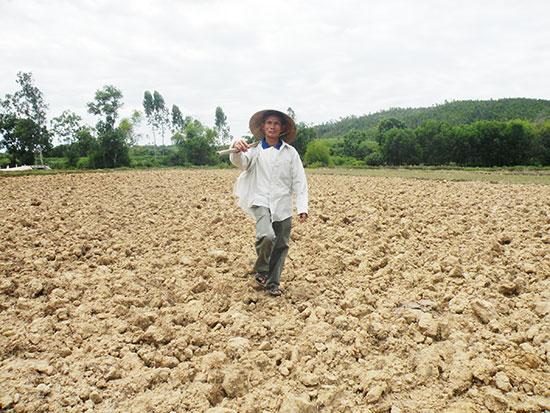 Do hạ tầng thủy lợi chưa được xây dựng đồng bộ nên nhiều diện tích đất sản xuất lúa của Quế Sơn thường phải bỏ hoang trong vụ hè thu. Ảnh: VĂN SỰ