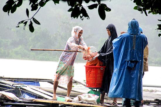 Người dân thu hoạch vét, hạn chế cá thất thoát ra bên ngoài trong mùa bão lũ 2017. Ảnh: Quang Việt