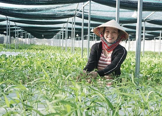 Nguyễn Thị Y khởi nghiệp với vườn rau thủy canh Boppy's Farm tại xã Duy Hải, huyện Duy Xuyên. Ảnh: NHƯ TRANG