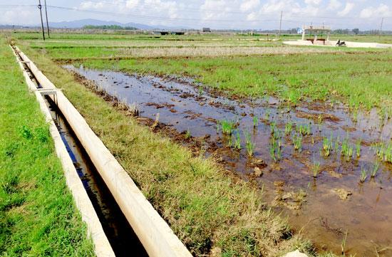 Diện tích đất sản xuất của nhân dân bị ngập úng do mương chỉ có công năng tưới chứ không thể tiêu nước. Ảnh: PHAN VINH